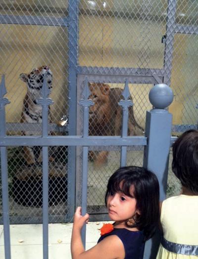 حديقة حيوانات وسط مول في الرياض
