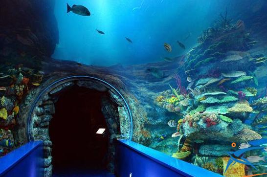 متحف مائي