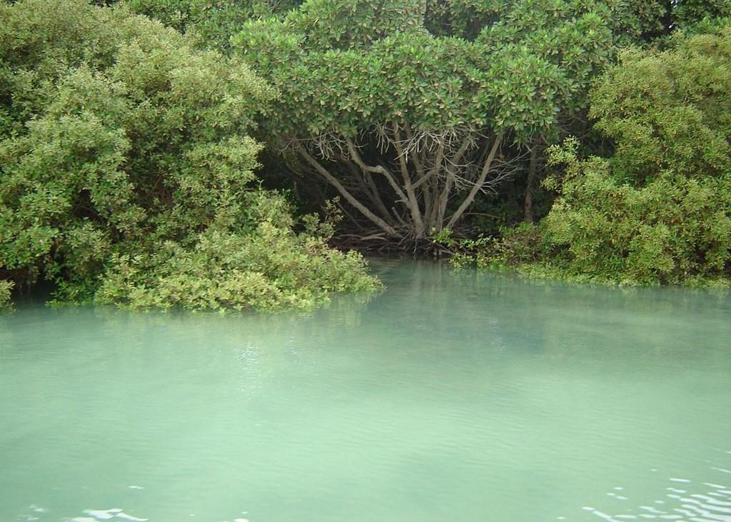 أشجار المونوجروف