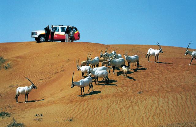 شركة المغامرات العربية