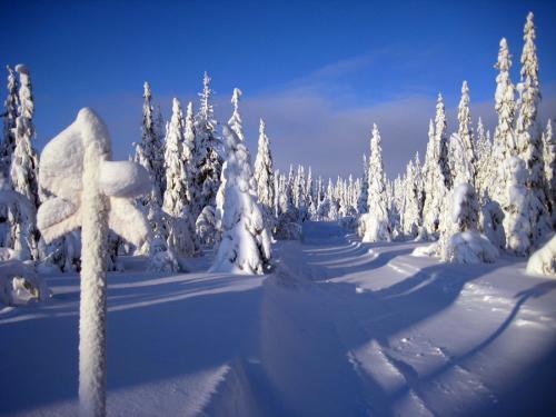 أفضل 9 وجهات لفصل الشتاء