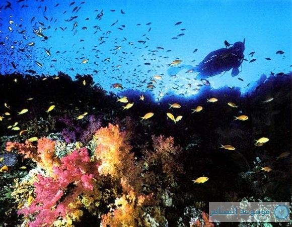 أعماق البحر الأحمر