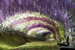 أنفاق يابانية من نوع خاص داخل حديقة كواتشي فوجي