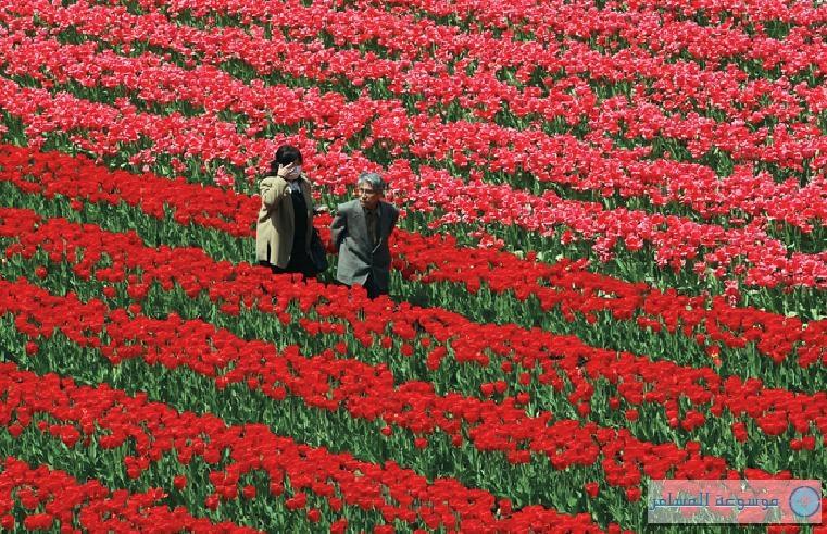 انطلاق فعاليات مهرجان الزهور في مدينة تويوكا