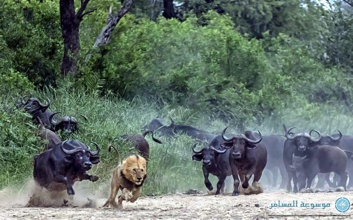 اللقطة المثيرة من جنوب أفريقيا