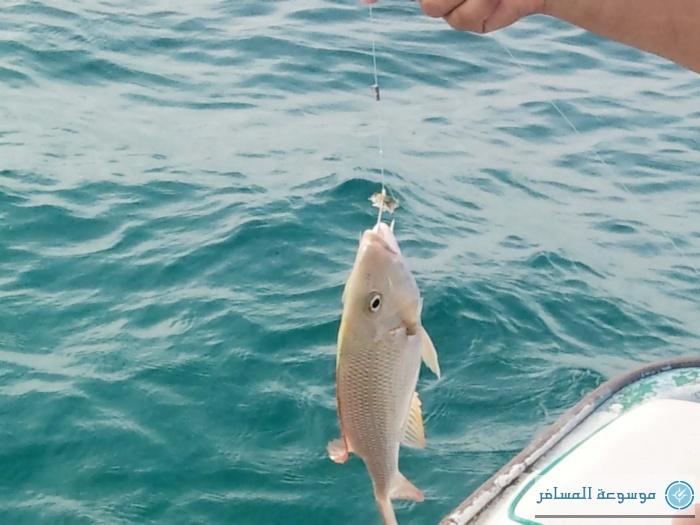 بطولة المملكة لصيد الأسماك