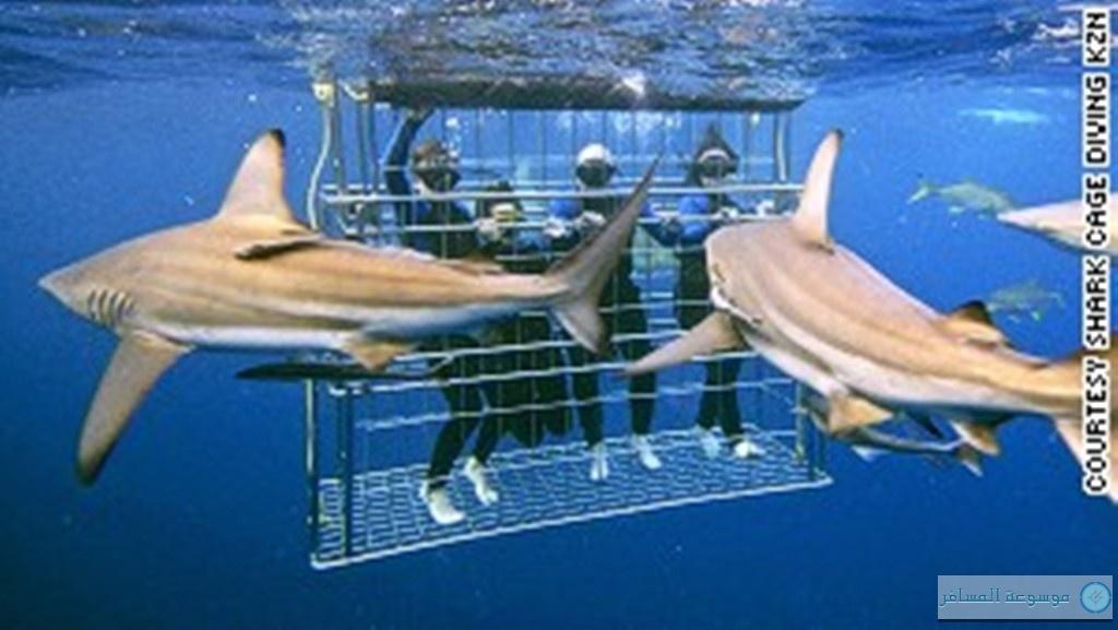 أفضل الأماكن للسباحة مع القروش فى العالم