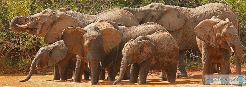 إنشاء قبو أرضي لمراقبة الفيلة فى بتسوانا