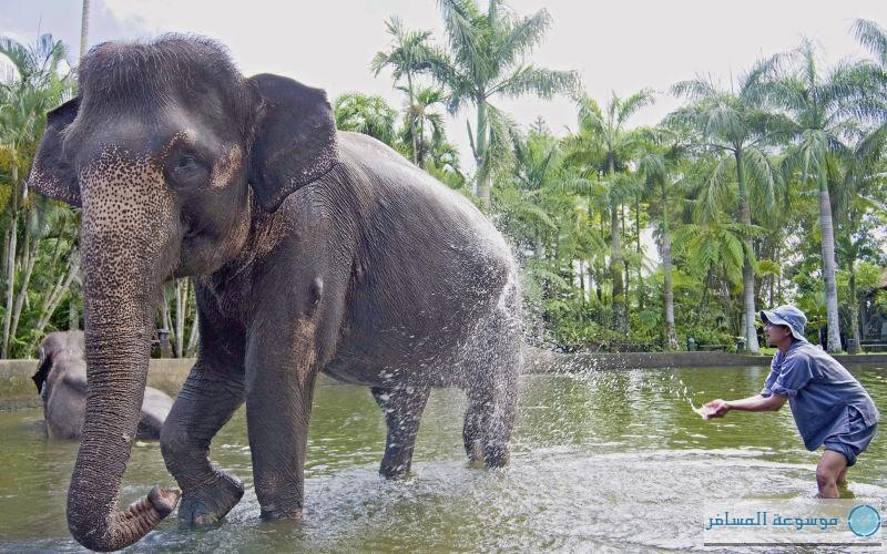 حديقة الأفيال واحدة من أكبر الحدائق في صنفها في العالم