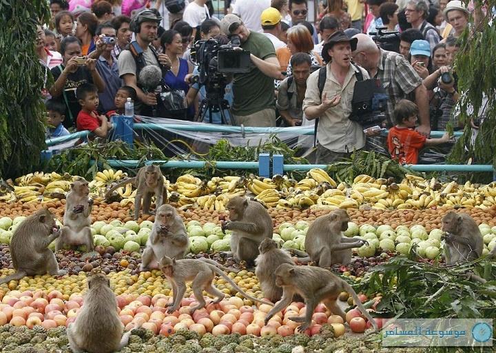 مهرجان بوفيه القرود