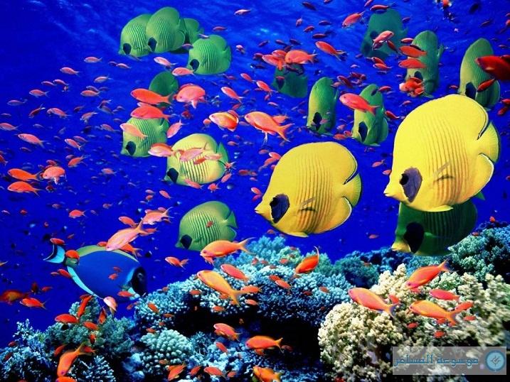الغوص فى البحر الاحمر