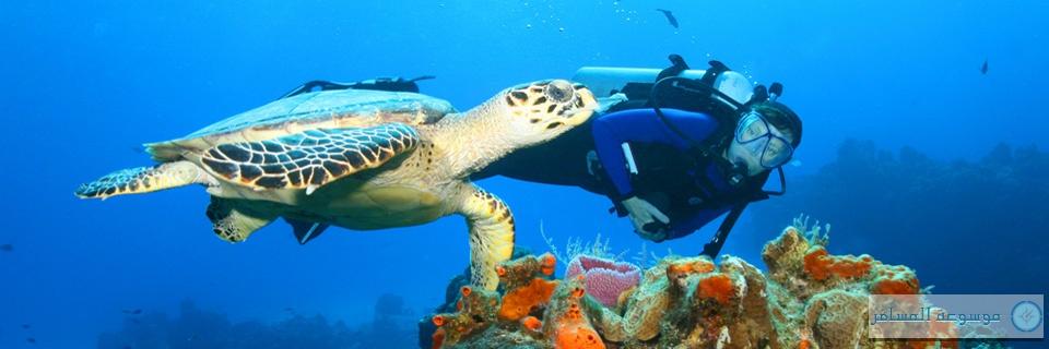 A_diving_playa-del-carmen_turtle_SS-6728