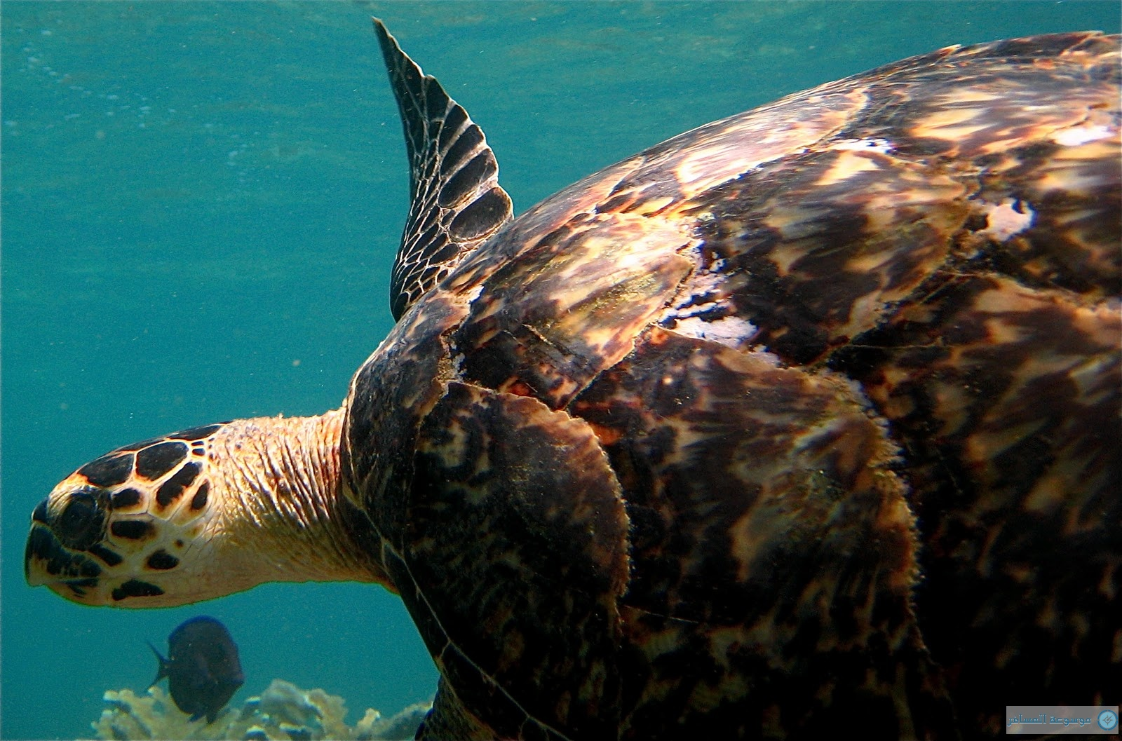 Marine life of Puerto Rico