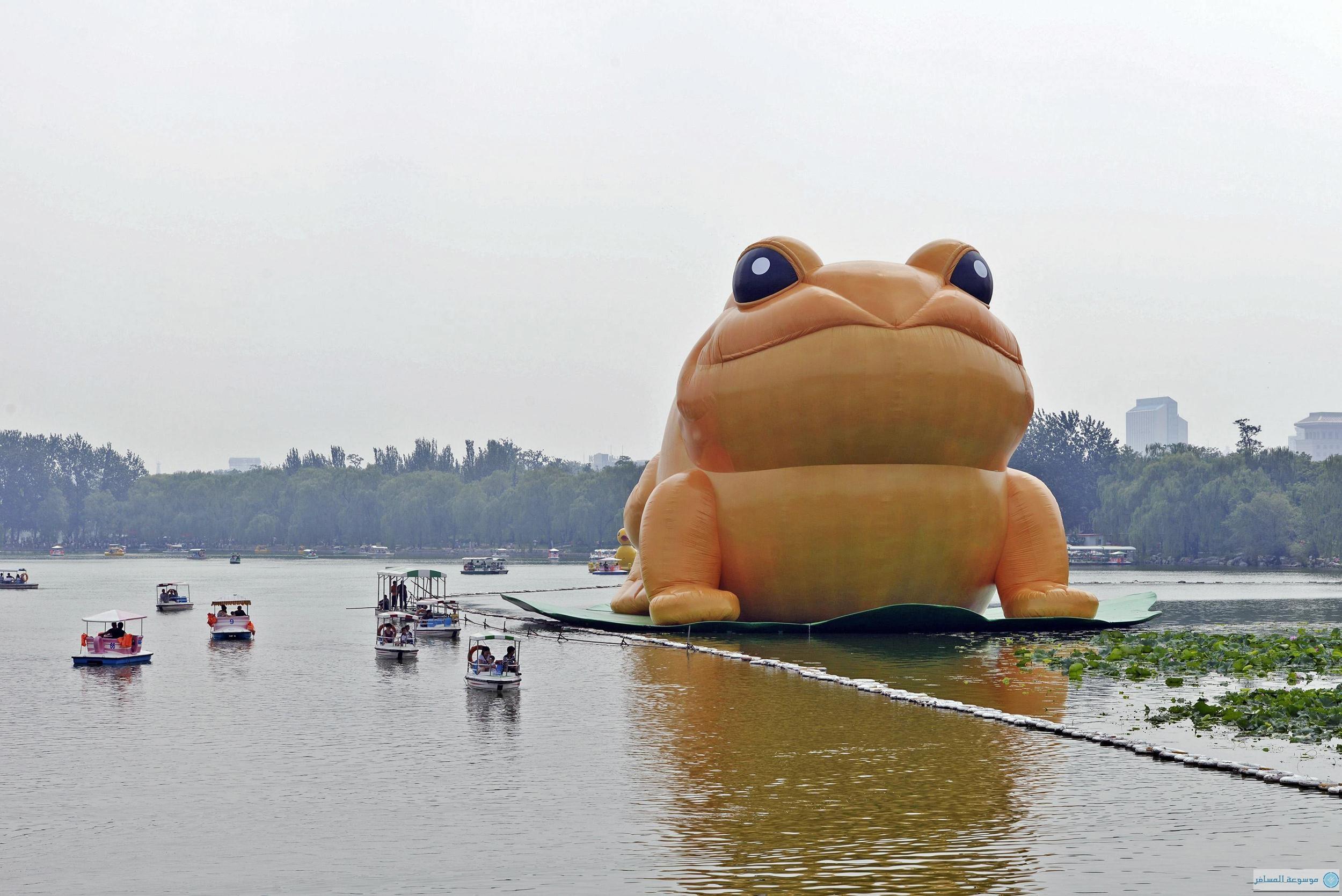 العلجوم في الصين
