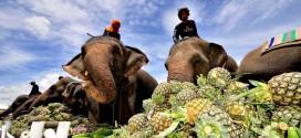 """بالصور: كأس الملك لـ """"بولو الأفيال"""" .. سادس أكبر حدث سياحي سنوي فى تايلاند"""