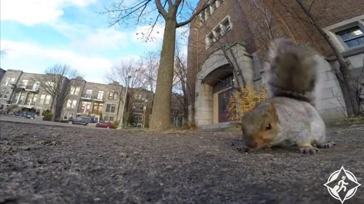 فيديو السنجاب يسرق كاميرا ويحاول التقاط سيلفي