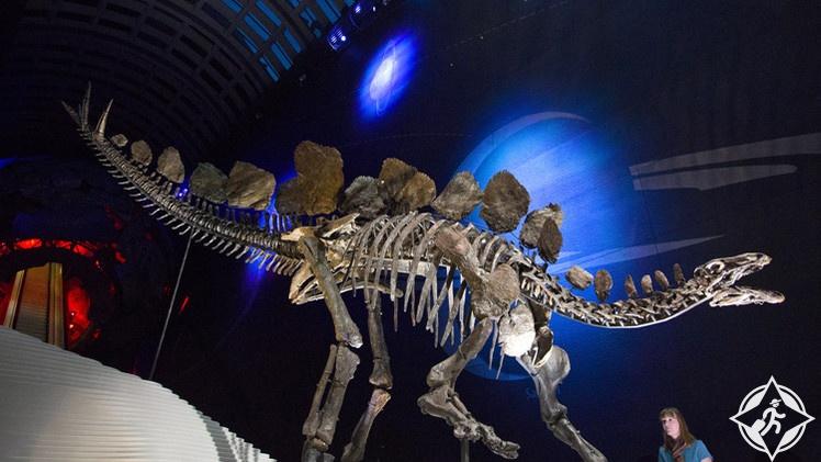 هيكل عظمي نادر لديناصور عُمره 150 مليون عام في معرض بلندن