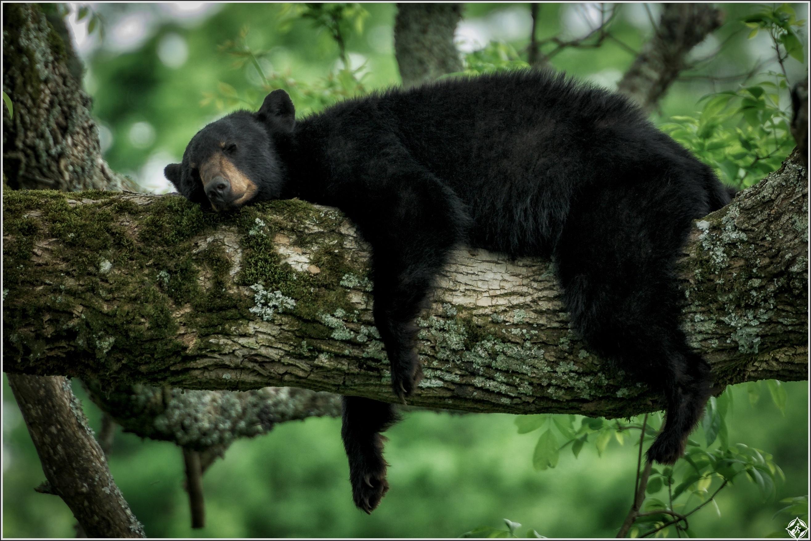 المحميات الطبيعية Sleeping Bear, Great Smoky Mountains National Par