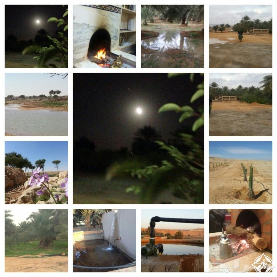مزارع في الرياض السياحة الزراعية