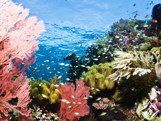 الغوص في جزر واكاتوبي