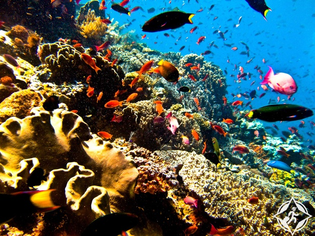 الغوص في جزيرة بونكان باندونيسيا