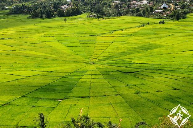 زراعة الأرز في روتنغ ، جزيرة فلوريس