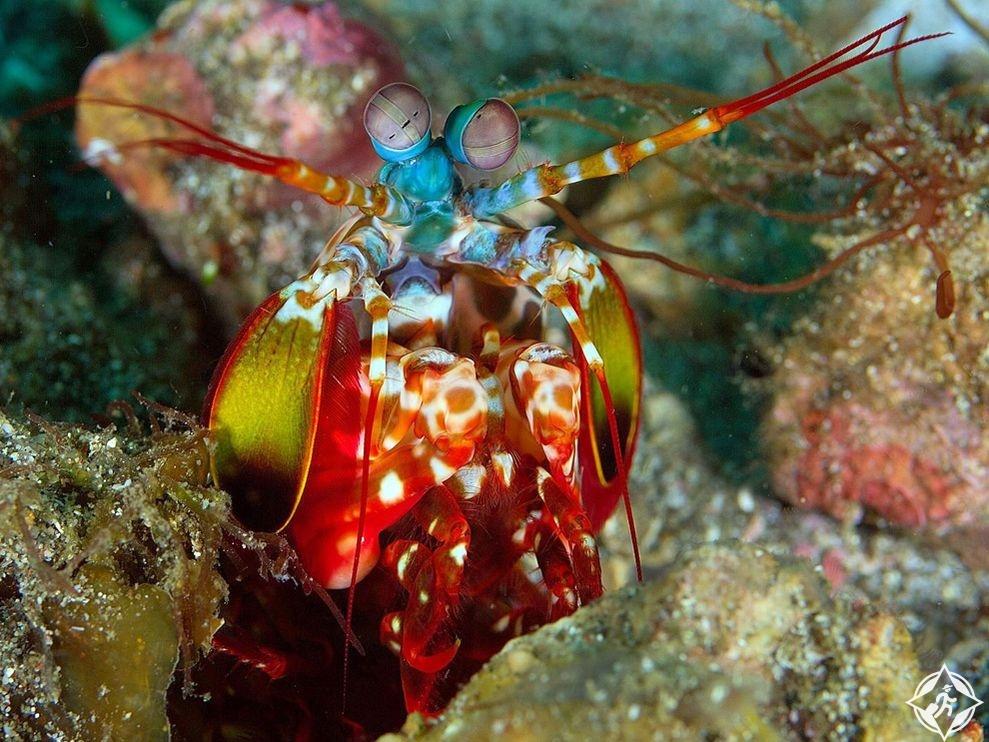 الحياة البحرية 1