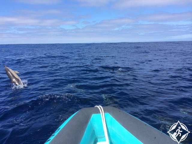 الحيتان في ماديرا