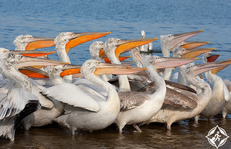 بحيرة سريبرنا