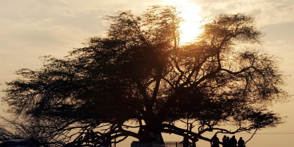 شجرة الحياة في البحرن