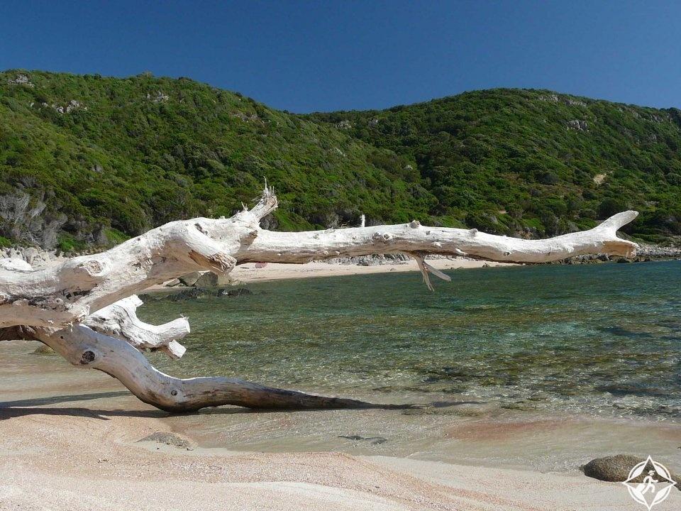 جزيرة كورسيكا