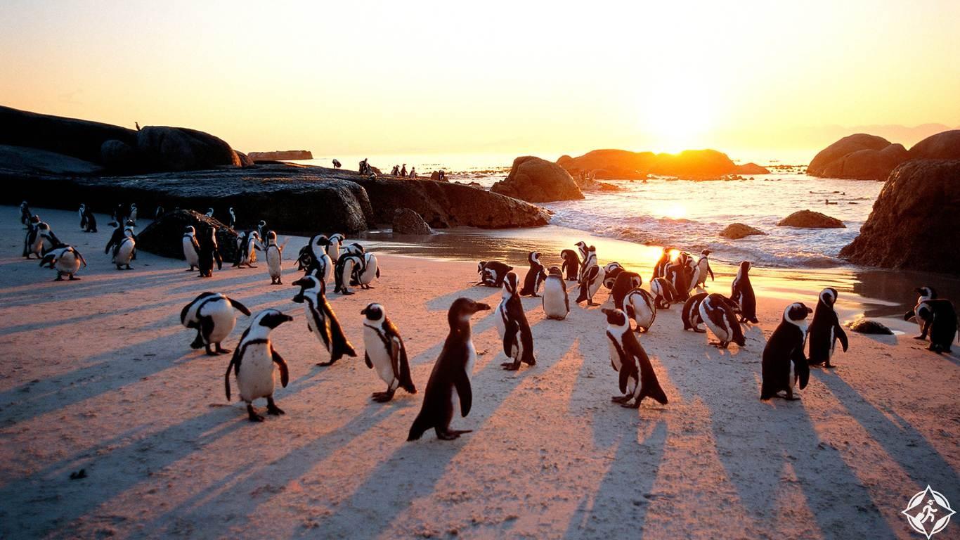 جنوب أفريقيا .. افضل وجهات السفر للعائلة