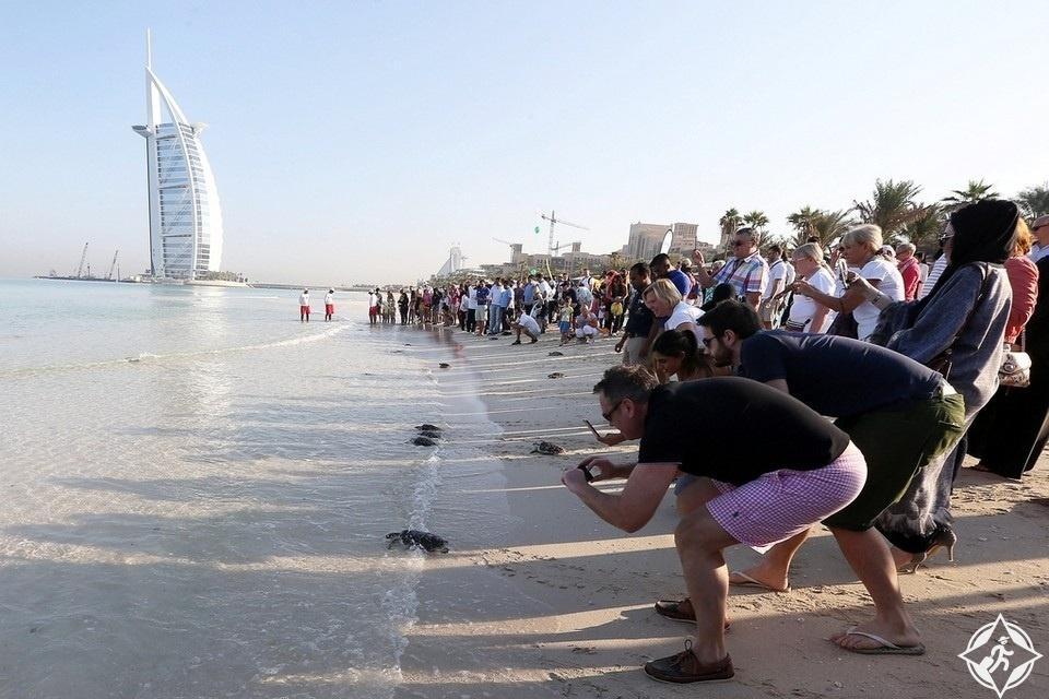 44 سلحفاة في شاطىء جميرا