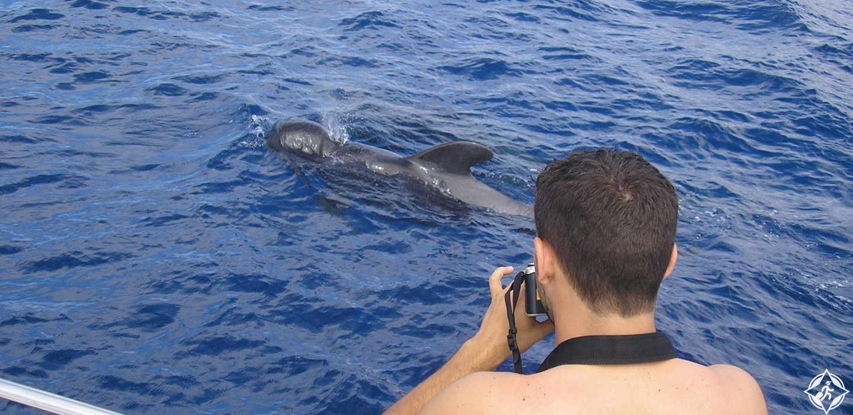 اكتشاف الدلفين