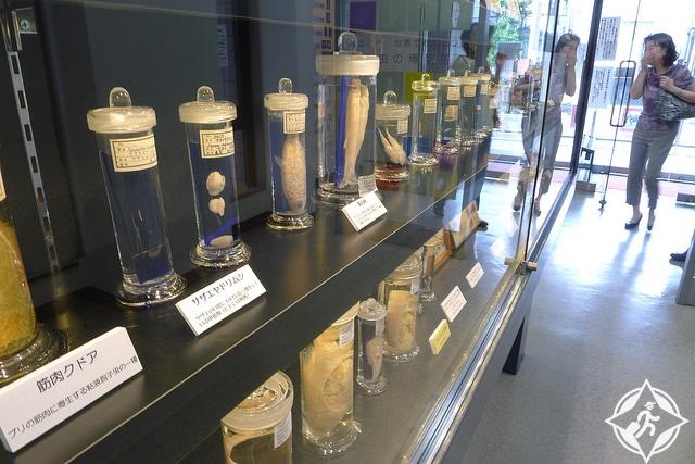 متحف الطفيليات