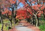 حدائق في طوكيو