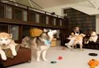 فنادق للحيوانات