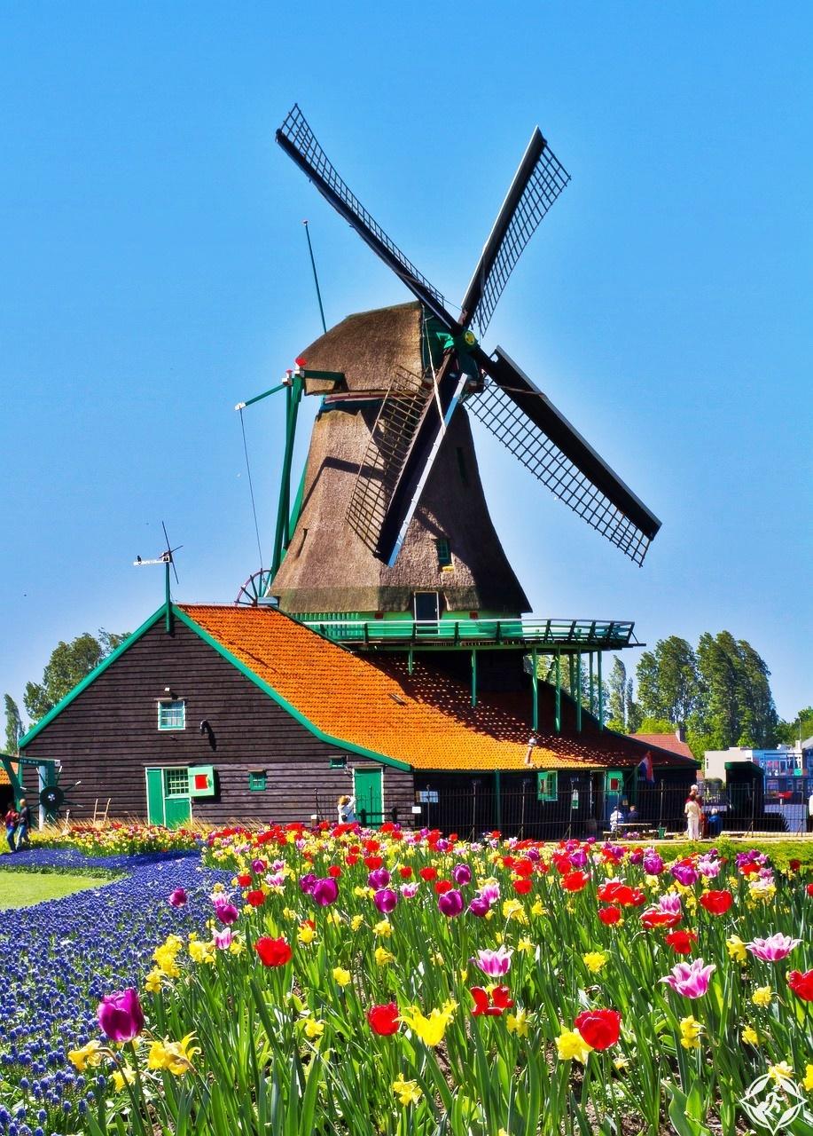 طواحين الهواء في هولندا