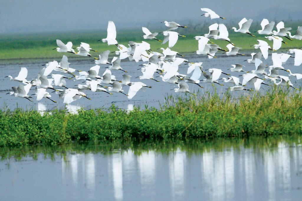 محمية ماي بو الطبيعية