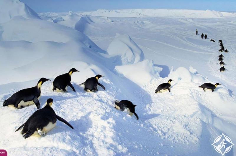 افضل اوقات السفر الى القطب الجنوبي