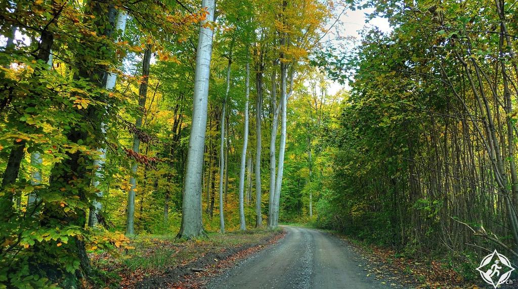 الغابات في كرواتيا