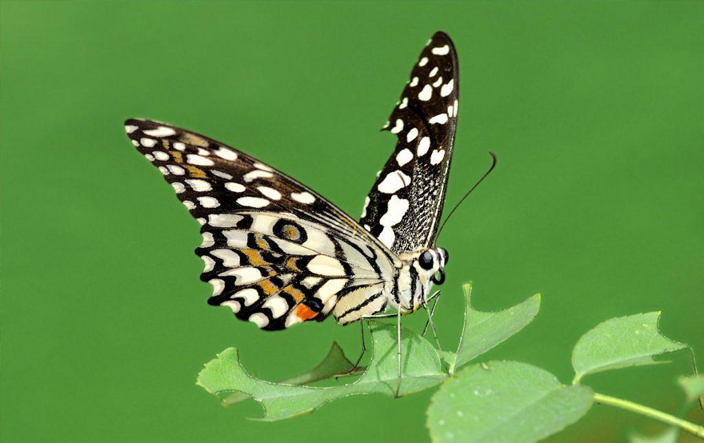 7 . مملكة الفراشات والحشرات