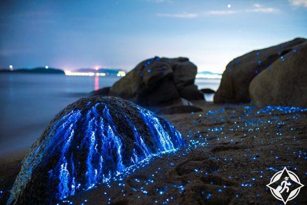 يراعات البحر في اليابان 1