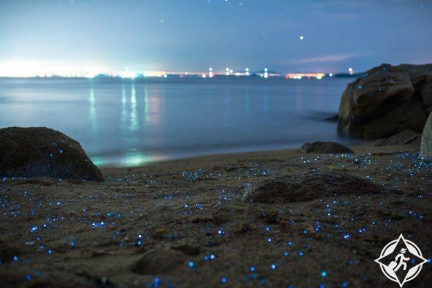 يراعات البحر في اليابان 2