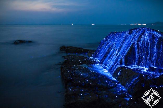 يراعات البحر في اليابان 5