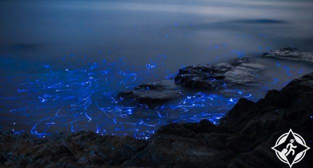 يراعات البحر في اليابان 8