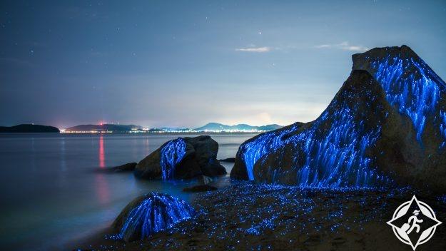 يراعات البحر في اليابان