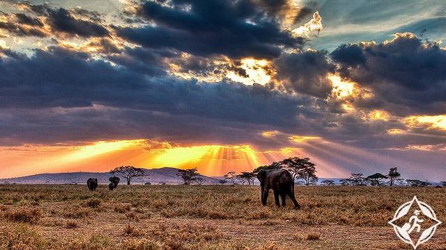 الحياة البرية في تنزانيا