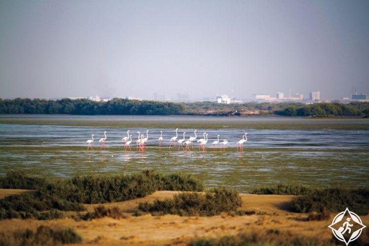الإمارات-أم القيوين-جزيرة السينية-أهم المعالم السياحية في أم القيوين