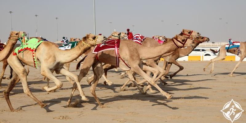 الإمارات-أم القيوين-سباق الهجن-أهم المعالم السياحية في أم القيوين